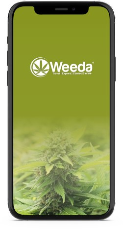 Explore the world of cannabis with